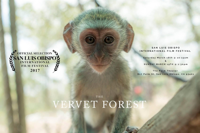 Vervet Forest
